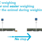 Dynamic Weighing operation
