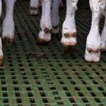 calf_plastic_slats_3