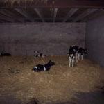 calf_plastic_slats_5
