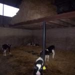 calf_plastic_slats_6