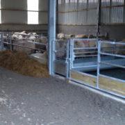 sheep_feed_barriers_6