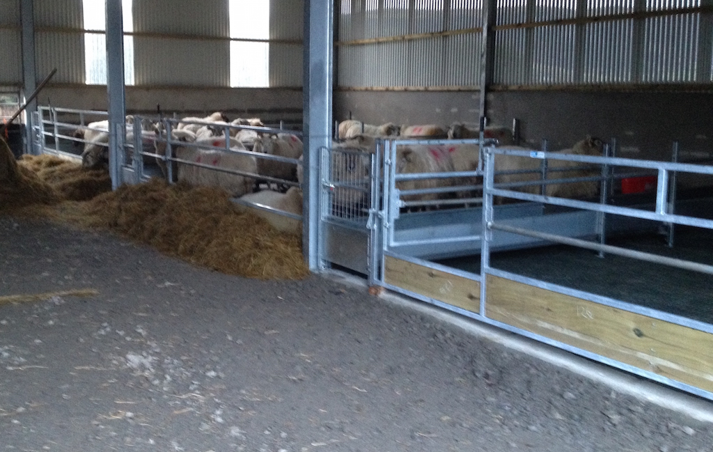 Feed Barriers