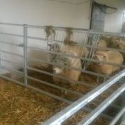 sheep_hay_rack_3