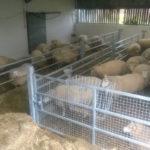 sheep_hay_rack_4
